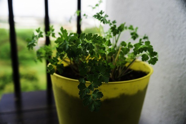 parsley-476872_960_720